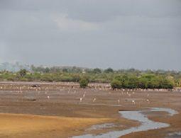 World Wetlands Day Celebrations